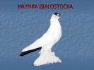 Krymka Białostocka
